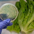 CDC: It's safe to eat romaine lettuce in Michigan