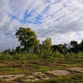 Detroit Artists' Test Lab to explores urban farming with free 'Land Grab' screening