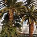 Belle Isle's Anna Scripps Whitcomb Conservatory reopens on Wednesday