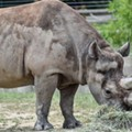 Suburban Detroit trophy hunter allowed to import rare black rhino's parts to Michigan