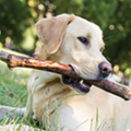 Longtime Michigan dog trainers claim to have trained dogs to detect COVID-19