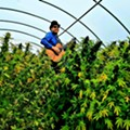 Tom Wall's journey into the secret life of marijuana plants