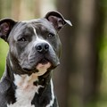 Unlicensed dogs shot to death are 'contraband,' federal judge rules in Detroit case
