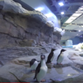 Detroit Zoo's penguin center wins prestigious exhibit award