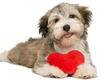 c1c38967_135137092-dog-valentines-day-date-632x475.jpg