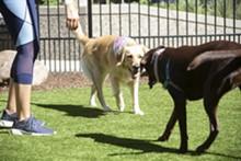 Capitol Dog Park - Uploaded by Kamryn Lowler
