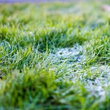 96a2e4b1_fall_lawn_care.jpg