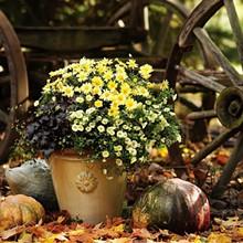 6b2650d4_fall_container_garden.jpg