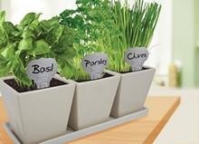 00b9e05b_indoor_herb_gardening.jpg