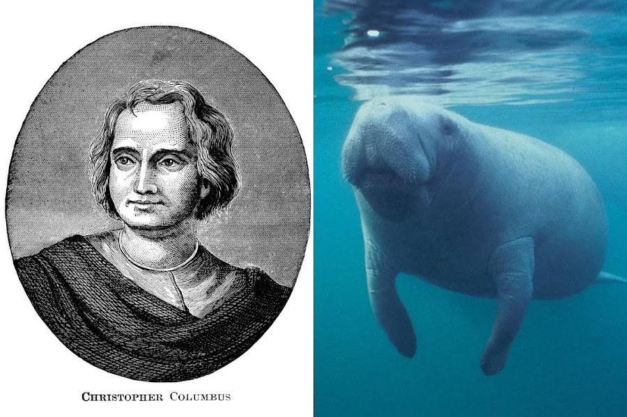 In addition to his ruthless violence against the Taino people and other Native Americans,Christopher Columbus was catfished by buxom sea cows.
