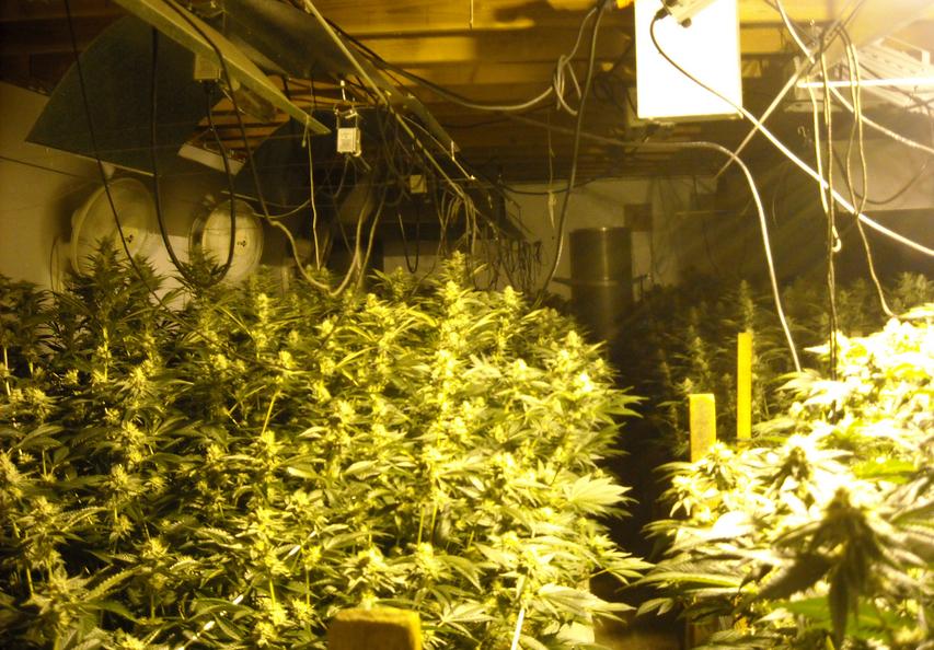 redcrest-marijuana.png