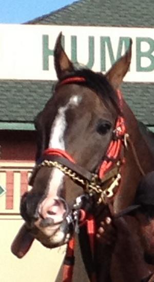 cropped-horse-tongue-closeup.png