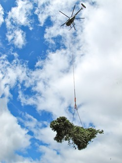 PHOTO BY EMILY BRADY - A law enforcement helicopter hoists a bundle of mature marijuana plants.