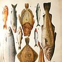 Sea Food Nation