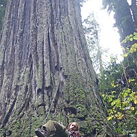 What Now, Treesitter? A treesitter descends from an old growth redwood in the Nanning Creek watershed. Photo courtesy of We Save Trees