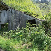 By the Breach An old barn overtaken by nature across the highway from Stone Lagoon Photo by Heidi Walters