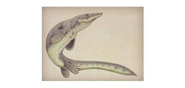 Artist's depiction of Platecarpus Coryphaeus with an anguilliform-like swimming motion. - ILLUSTRATION BY DMITRY BOGDANOV/WIKIMEDIA COMMONS