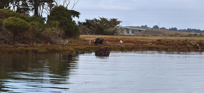 Is this rotting fin of wood planks really one of Jack London's old boats? Only the egret knows. - PHOTO BY DREW HYLAND