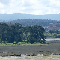 The Egrets of Indian Island