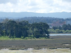 PHOTO BY BARRY EVANS - Best view of the rookery (and County Jail!) is from the Samoa bridge.