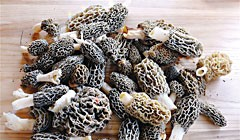 A Yurok Mushroom Hunter