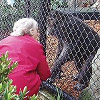 Saga of an Ape — The surprising true story of the late Bill the Chimp Bill meets Jane Goodall. Photos by Gretchen Ziegler.