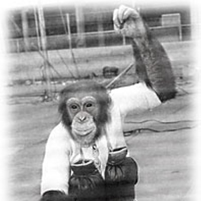 Saga of an Ape — The surprising true story of the late Bill the Chimp