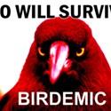 This is Birdemic