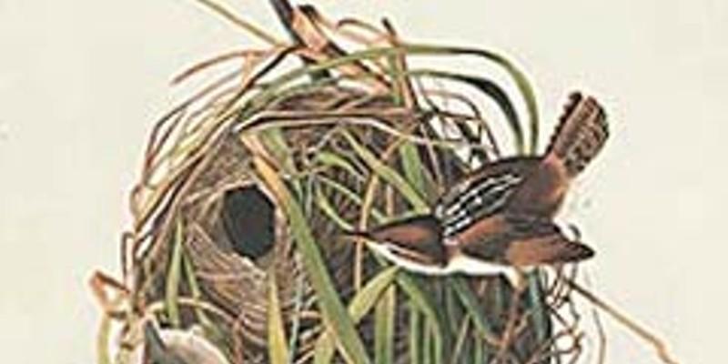 Birders of America
