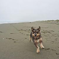 Best Of Humboldt -- Staff Picks Canine joy at Samoa Beach. Photo by Ryan Burns