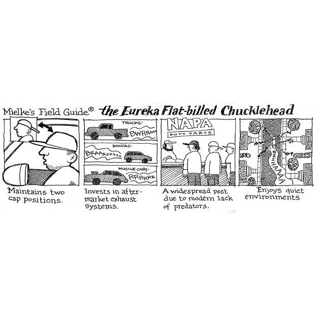 Mielke's Field Guide - The Eureka Flat-Billed Chucklehead