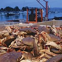 Best Of Humboldt -- Staff Picks Crabs. Photo by Heidi Walters