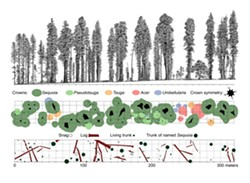 COURTESY OF SAVE THE REDWOODS LEAGUE - Cross-section and overhead maps on research plot.