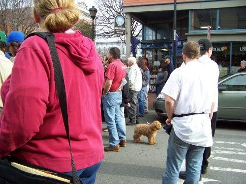 gimpbut_wait_did_the_dog_predict_arnold_s_arrival.jpg