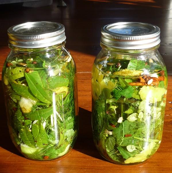 DIY Herbal Liqueur - PHOTO BY AMY STEWART
