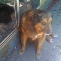 Dog Owner Fail [Update: Suspect Identified]