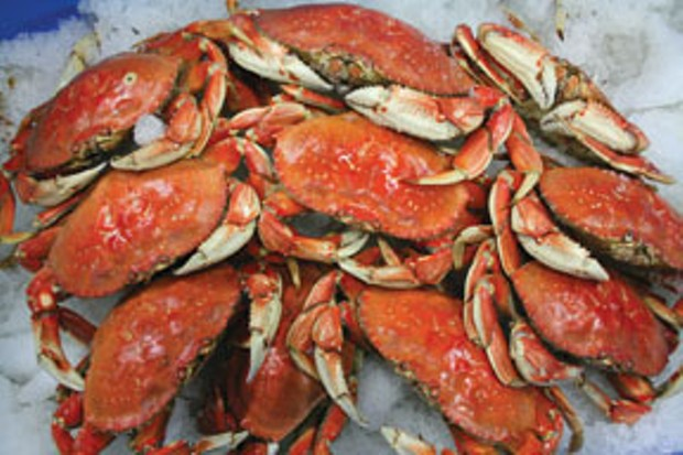 Dungeness crab. Photo by Bob Doran.
