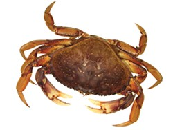 SCHOOLPHOTOPROJECT.COM - dungeness crab