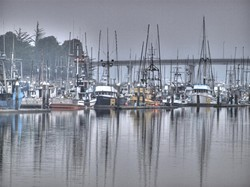 monday-morning-fog-1.jpg