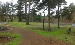 TINA MOULTON - Eureka Dog Park, waiting for the grass to grow