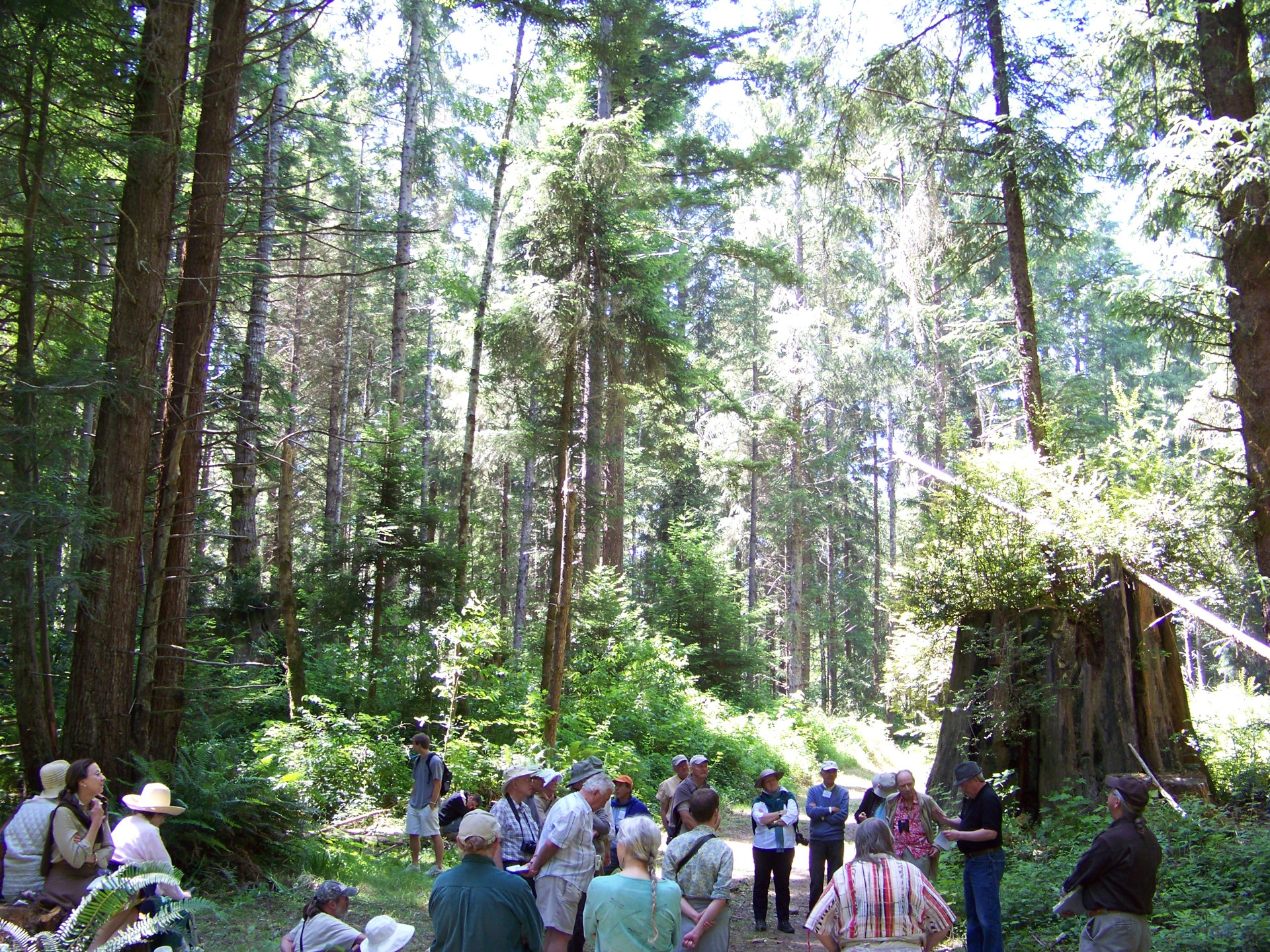 Eureka forester Jim Able holds court in the Van Eck Forest with members of the International Dendrology Society, who came from England, Belgium, France, The Netherlands, New Zealand, Germany, Singapore, Argentina, Australia and the U.S.A. - PHOTO BY HEIDI WALTERS