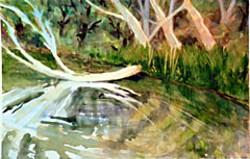 Fallen Alder, by Judy Evenson.