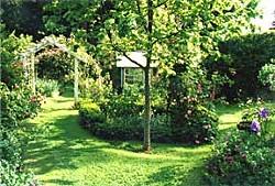 Fickle Hill Old Rose Nursery.