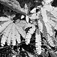 The Shady Lives of Ferns