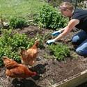Gen X and Y Gardeners