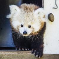 Name Those Pandas