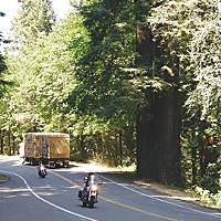 Drive-Thru Redwoods