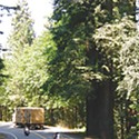 Drive-Thru Redwoods