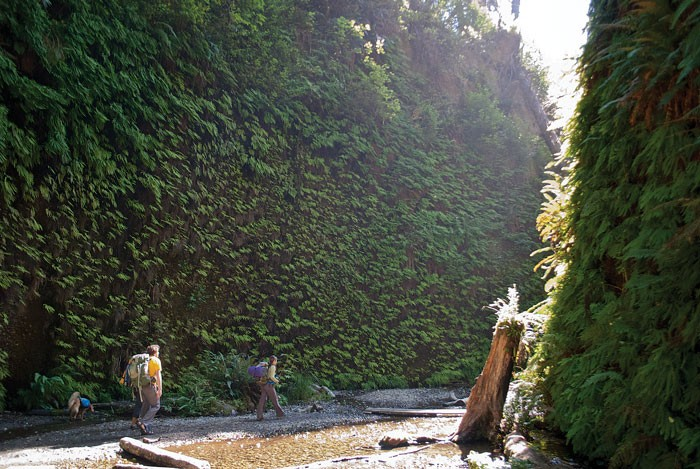 Hikes are magical in Fern Canyon. - PHOTO BY DREW HYLAND