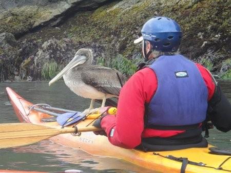 pelican-arrives.jpg